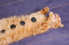 Kitten sleeps with spa stones Stock Photo