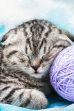 Kitten sleeps on the tangles of yarn Royalty Free Stock Photography