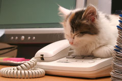 Kitten sleeps on a telephone Stock Photos
