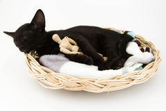 Kitten sleeps with a toy Stock Photos