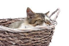 Kitten sleeps in a wicker basket on a white background Royalty Free Stock Photos