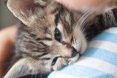 Kitten slip on the shoulder of the boy outdoors Stock Photos