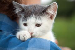 Kitten slip on the shoulder of the boy outdoors.  Stock Photo