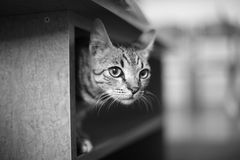 A kitten Stock Photo
