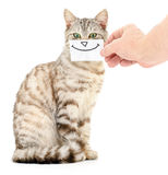 Kitten smiling. Stock Photo