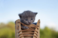 Kitten with smoky color and blue eyes in the boot, in the nature Royalty Free Stock Photos