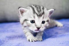 The kitten sneaks. A little pretty baby. Cute kitten Royalty Free Stock Photo