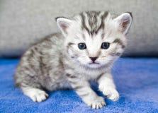 The kitten sneaks. A little pretty baby. Cute kitten Royalty Free Stock Photography