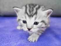The kitten sneaks. A little pretty baby. Cute kitten Stock Photos