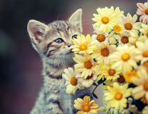 Kitten sniffing flowers Stock Image
