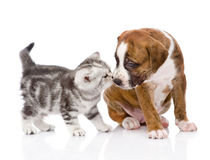 Kitten sniffing puppy. isolated on white background Royalty Free Stock Photography