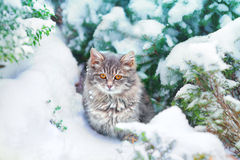 Kitten in the snow Royalty Free Stock Photography