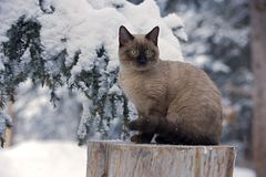 Kitten in Snow Royalty Free Stock Images