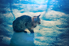 Kitten in snow Royalty Free Stock Image