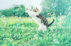 Kitten and soap bubbles Royalty Free Stock Images