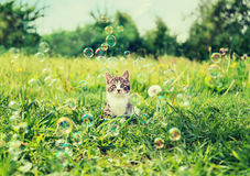 Kitten among soap bubbles. Cute kitten sitting among soap bubbles on summer meadow. Image with vintage instagram filter Stock Images