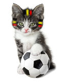 Kitten with a soccer ball stock photo