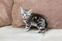 Kitten on sofa - Stock Image Royalty Free Stock Photography