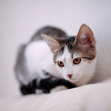 Kitten on a sofa. Royalty Free Stock Image