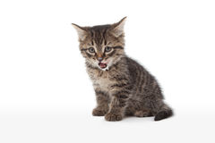 Kitten with sour cream on his lips. Funny kitten with sour cream on his lips Royalty Free Stock Photos