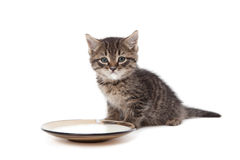 Kitten with sour cream on his lips Stock Photography