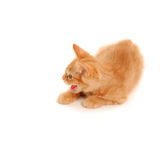 Kitten spits Royalty Free Stock Images
