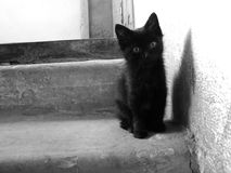 Kitten on the stairs Royalty Free Stock Image