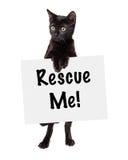 Kitten Standing Holding Rescue Sign preta Imagens de Stock Royalty Free