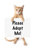 Kitten Standing Holding Sign muselée par blanc d'or Images stock