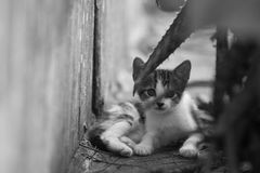 Kitten staring. Kittens stopping and staring intently at viewer Stock Photos