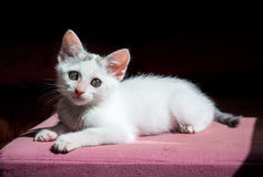 Kitten staring at the light Stock Image