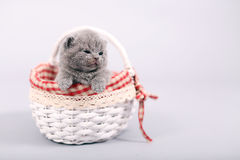 Kitten staying in a basket Royalty Free Stock Images