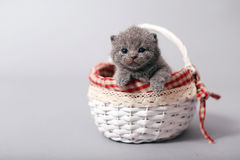 Kitten staying in a basket Stock Images