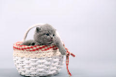 Kitten staying in a basket Stock Photo