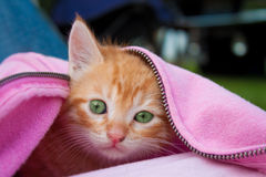 Kitten staying warm Stock Photo