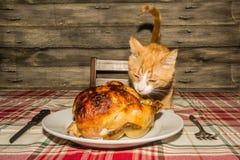 Kitten Stealing Holiday Dinner stock afbeelding