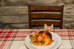 Kitten Stealing Holiday Dinner royalty-vrije stock foto's