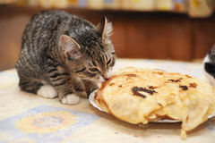 Kitten steals food Stock Photo