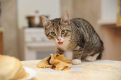 Kitten steals food Stock Images