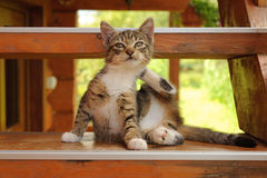Kitten on the steps Stock Image