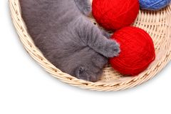 Kitten in straw basket with ball of yarn Royalty Free Stock Images