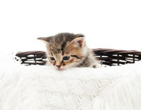 Kitten in a straw basket Stock Photos
