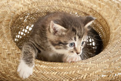 Kitten in straw hat Royalty Free Stock Image