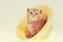 Kitten in straw hat Stock Image