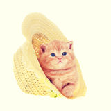 Kitten in straw hat Royalty Free Stock Images