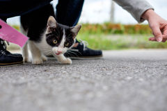 Kitten on street with human Royalty Free Stock Photos