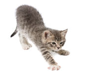 The kitten stretches Stock Images