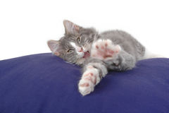 Kitten stretching Stock Images