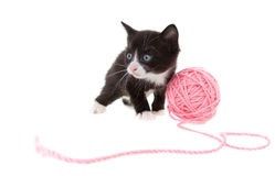 Kitten with string Royalty Free Stock Image