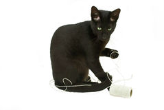 Kitten and string. 8 Month old black cat playing with string Stock Photography